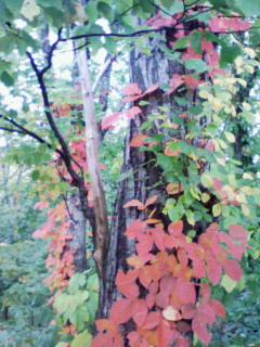 嵐山 紅葉2