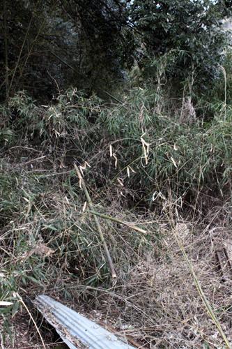 藪に潜むレール