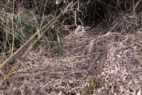藪の中のレール