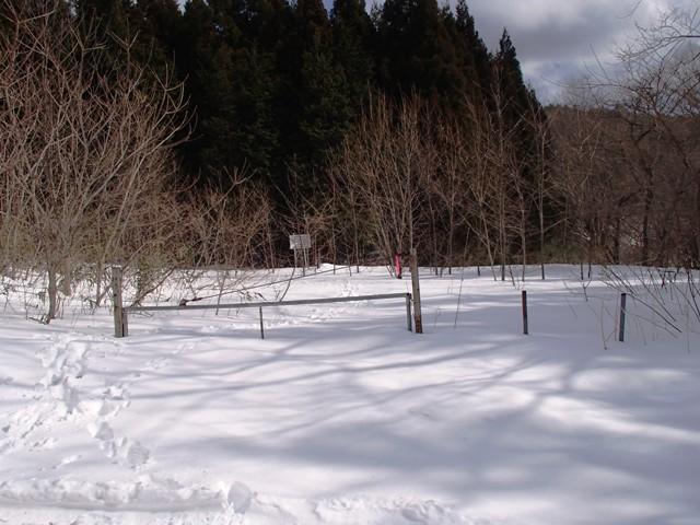 作業道から林道へ