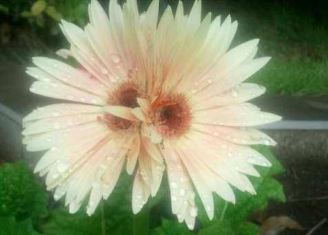 flower2x[1]