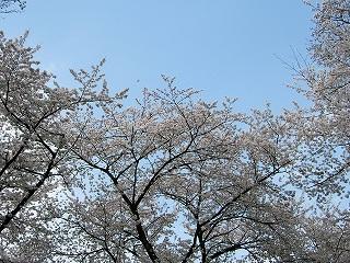 2011_04100051.jpg