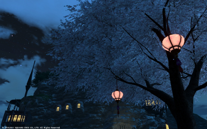 51日目 夜桜にゃ♪