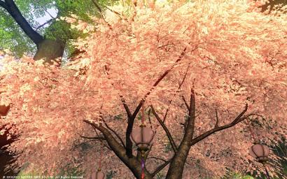 53日目 グリダニアの綺麗な桜に見送られ…