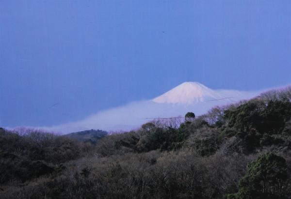 kamakura1_325.jpg