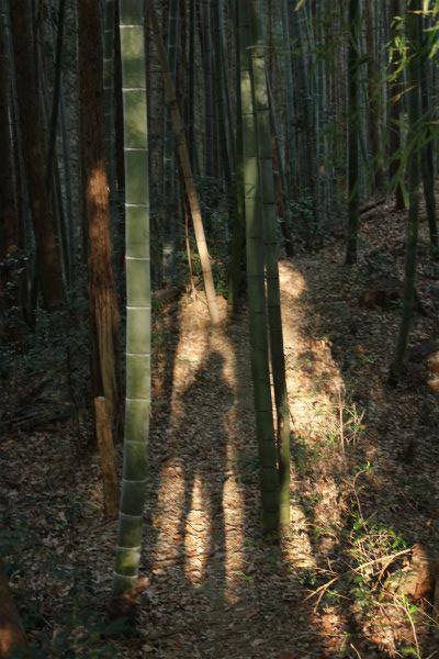 kuritaira2_194.jpg