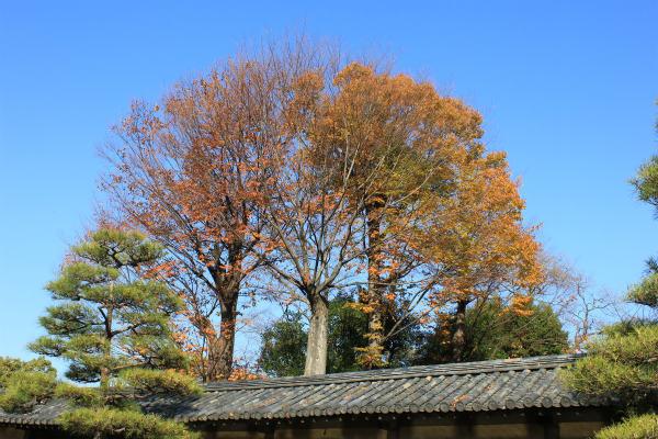 kyoto12_0955.jpg