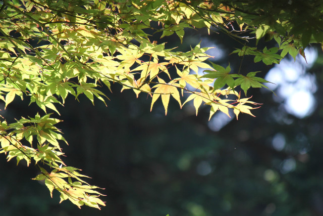 midori13-7_087.jpg