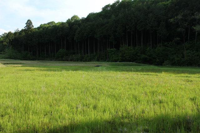 nanakuni13-5_138.jpg