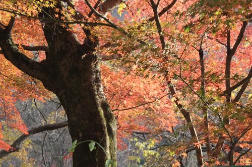 nikkou_098.jpg