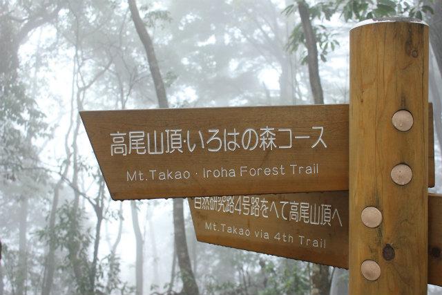 takao13-3_264.jpg