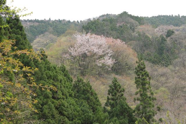 unazawa13-4_339.jpg