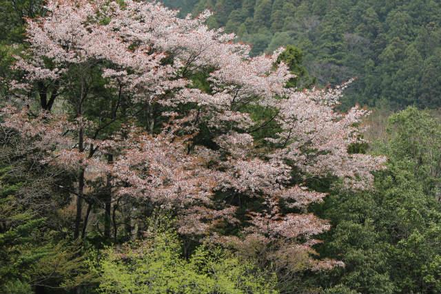 unazawa13-4_602.jpg