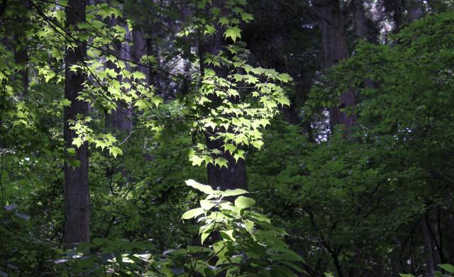 unazawa13-7_002.jpg
