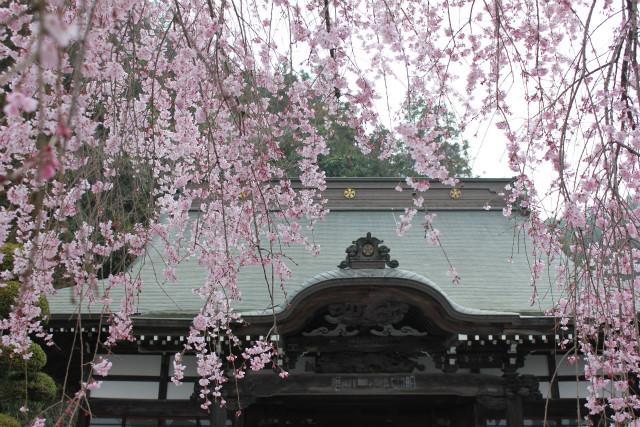 wakakusa13-3_064.jpg