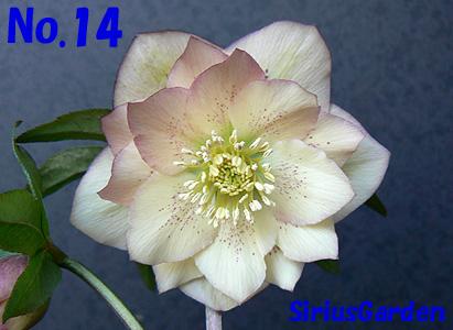 No.14a