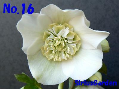 No.16a
