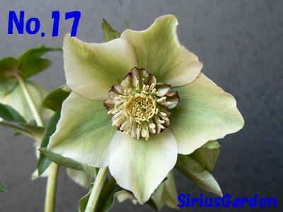 No.17a