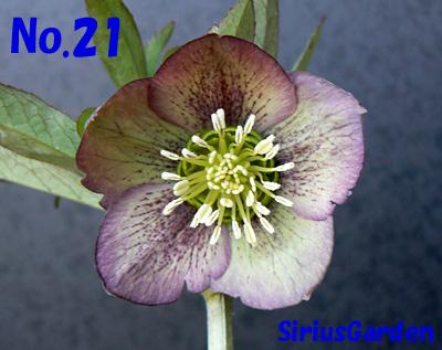 No.21a