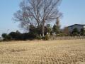 yagami2.jpg