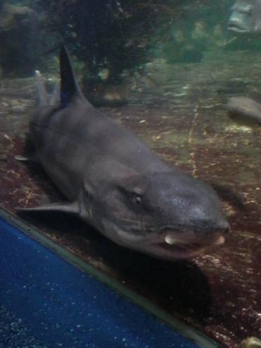 何やら来る鮫さん。