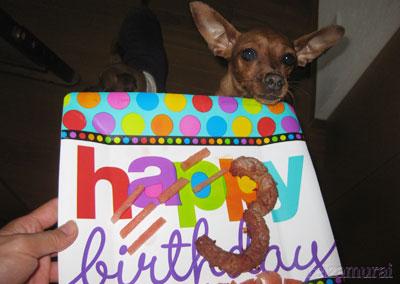 お誕生日なんでちけど・・・