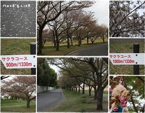 20110501f1.jpg