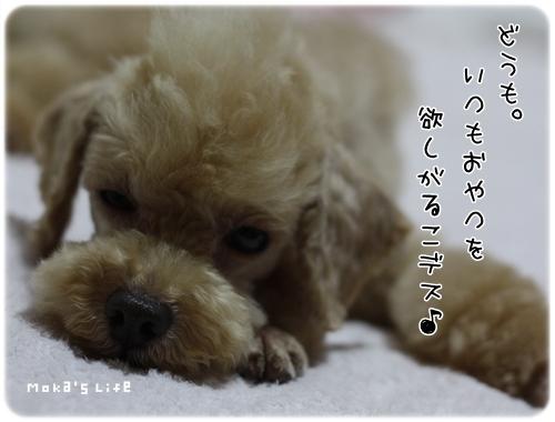 20110730f6.jpg