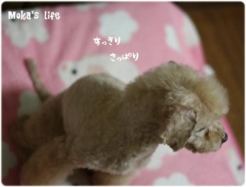 2_20101227140644.jpg