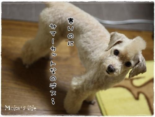 3_20101030212927.jpg