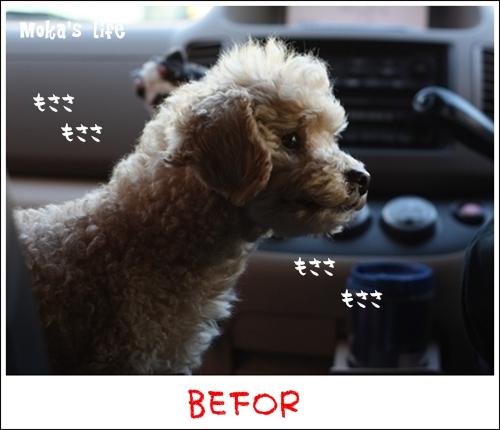 Befor_20101227140142.jpg
