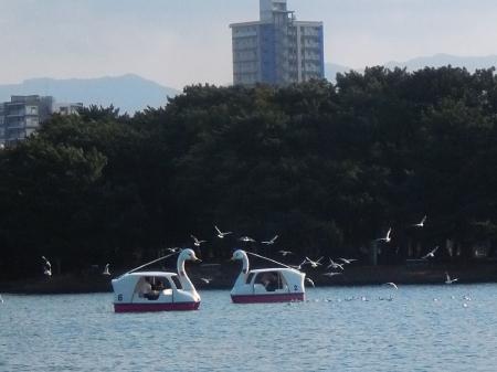 白鳥ボート