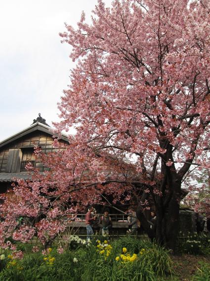 harasaku1.jpg