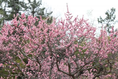 春ですね。5