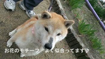 20130407sakuraa.jpg