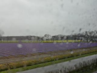 aroundamsterdam2