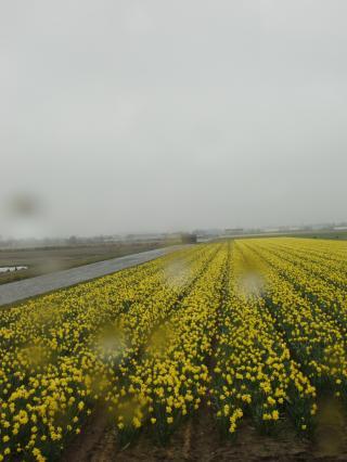 aroundamsterdam8