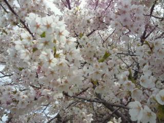 百合が原公園 2010.05.16