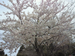 百合が原公園 2010.05.16 (1)