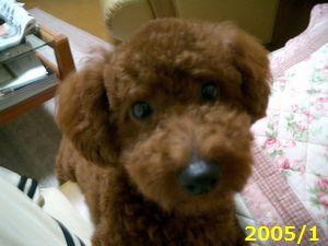 ジェームス 2005年1月