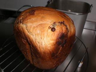 チョコチップパン1