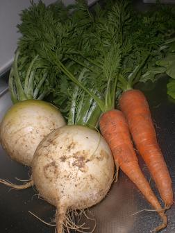 もらった野菜