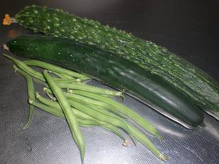 きゅうり収穫