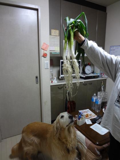 長ネギのひげ根