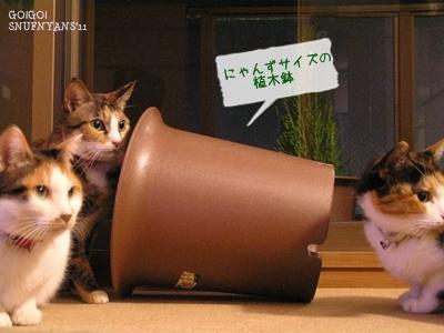 大きな植木鉢を用意しましょう
