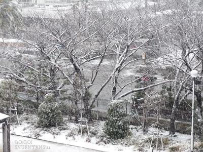 降り続く雪に