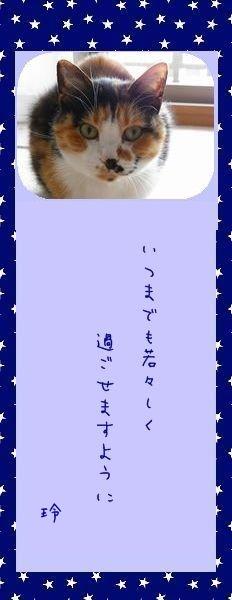 七夕祭り 2010 11 レイコさんのお願い事
