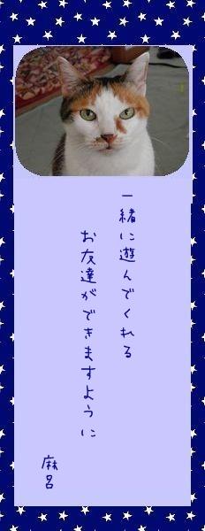 七夕祭り 2010 13 マー君のお願い事