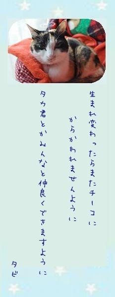 七夕祭り 2011 09 タビさんのお願い事