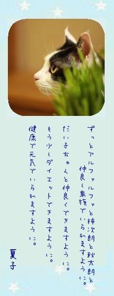 七夕祭り 2011 14 夏子さんのお願い事